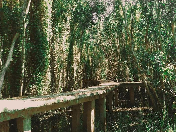 Con đường xuyên rừng có nhiều ngã rẽ, tuyệt đối tuân thủ và đi theo hướng dẫn viên để không bị lạc.
