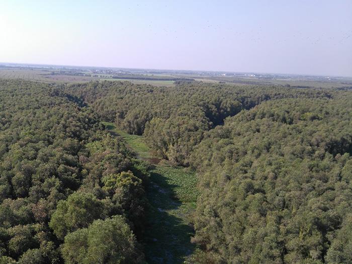 Những mảng màu xanh ngắt nơi rừng tràm. Ảnh: Trần Minh Sướng.